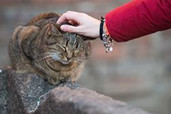 [reportage] I gatti del Castello