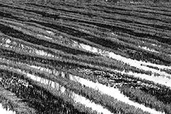 [paesaggio] Lungo il Sesia