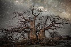 [grandi fotografi] Beth Moon la donna che fotografa alberi