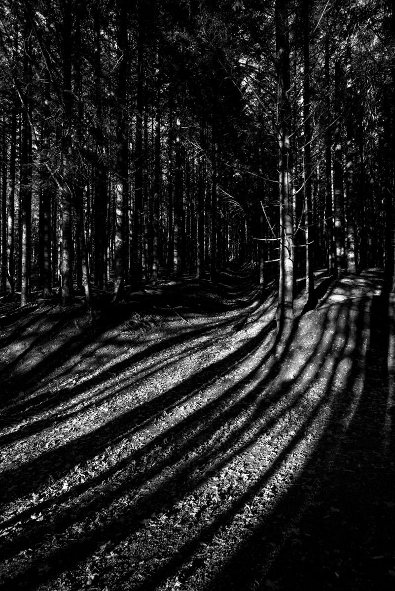 [natura] I colori dell'autunno... in bianco & nero