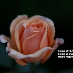 SDIM0659.jpg