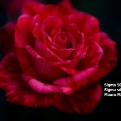SDIM0668.jpg