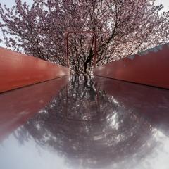 Andrea Zampieron contest Nikonland aria di primavera 1