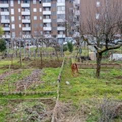Novara periferia (2) - Gennaio