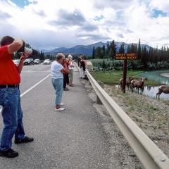 Jasper, Alberta - Canada - Luglio
