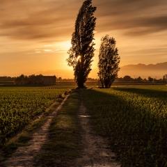 La strada di campagna