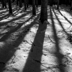 Tra gli alberi