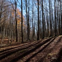 Autunno nelle Foreste Casentinesi - 3