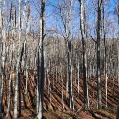 Autunno nelle Foreste Casentinesi - 2