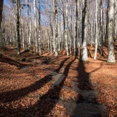 Autunno nelle Foreste Casentinesi - 5
