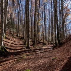 Autunno nelle Foreste Casentinesi - 1