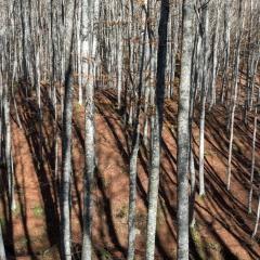 Autunno nelle Foreste Casentinesi - 4