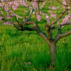 Visentin Leonardo - contest Nikonland aria di primavera 1