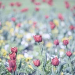 Arsenio contest Nikonland aria di primavera 1