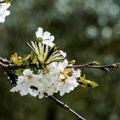 Gianni_54 contest Nikonland aria di primavera 1
