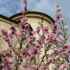 Giannantonio contest Nikonland aria di primavera 2