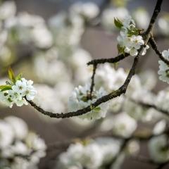 cris7 aria Di primavera 1