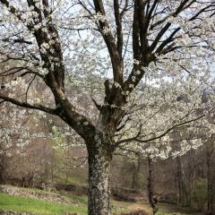 cris7 aria Di primavera 2