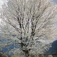 cris7 aria Di primavera 3
