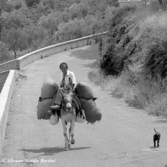 1987 Muro Lucano