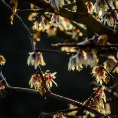 Aria di primavera ... fuori concorso ...