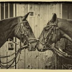 Horses R