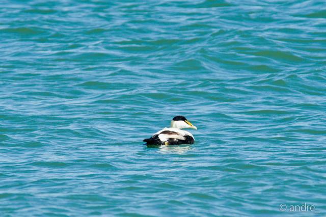 Immagine Allegata: 0951r18 birds.jpg