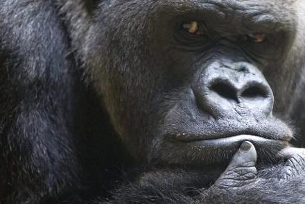 Immagine Allegata: primateweb.jpg