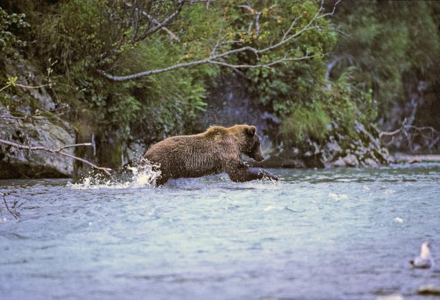 Immagine Allegata: Bear 07.2 (1).jpg