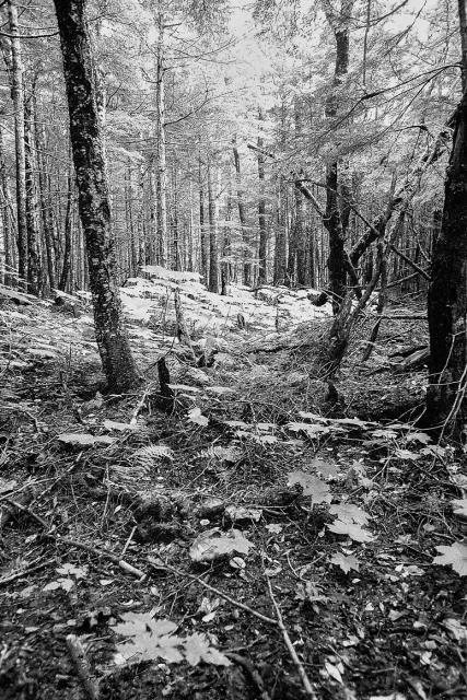 Immagine Allegata: Wood.jpg
