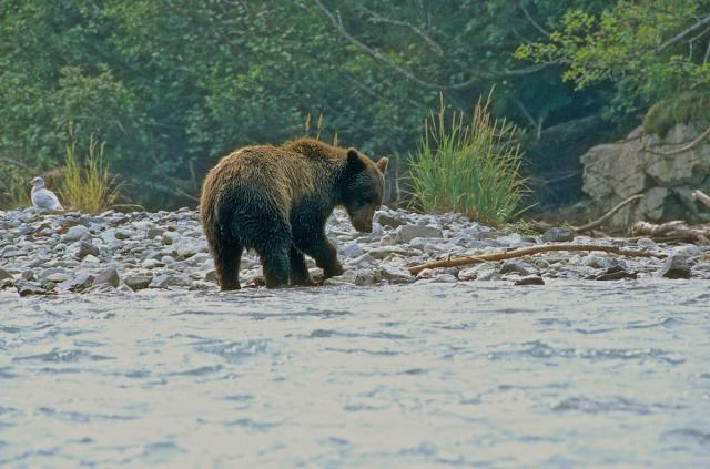 Immagine Allegata: Grizzly 16 (1).jpg