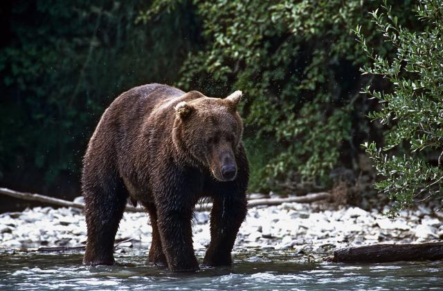 Immagine Allegata: Grizzly 18.jpg