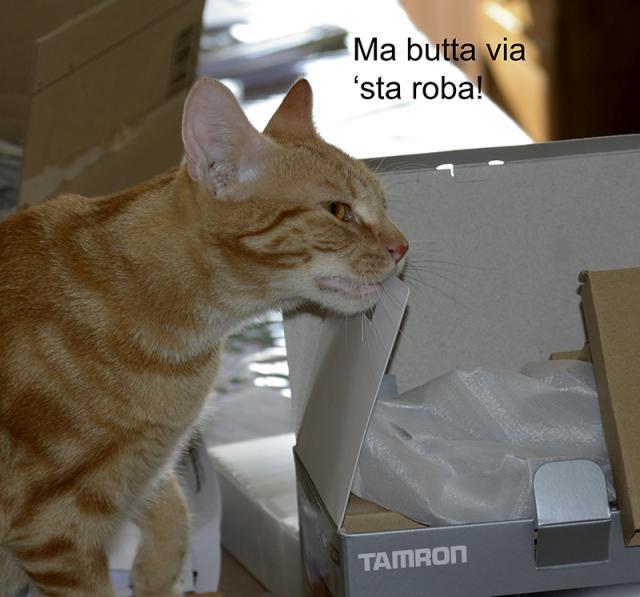 Immagine Allegata: unbox.jpg
