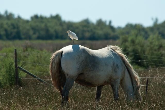 Immagine Allegata: cavallo.jpg