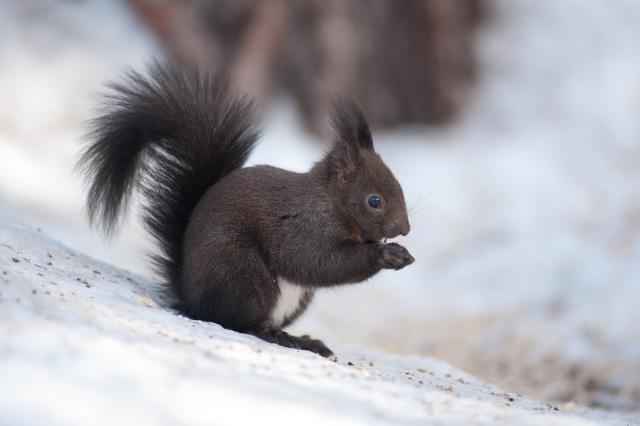 Immagine Allegata: scoiattolo.jpg