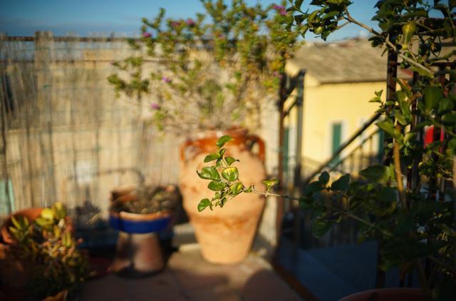 Immagine Allegata: foglie.jpg