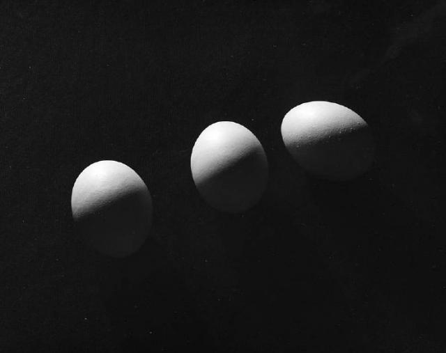 Immagine Allegata: egg12.jpg