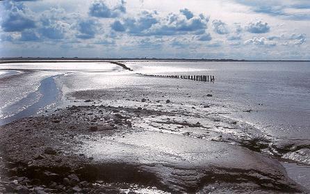 Immagine Allegata: texel-isola-spiaggia.jpg
