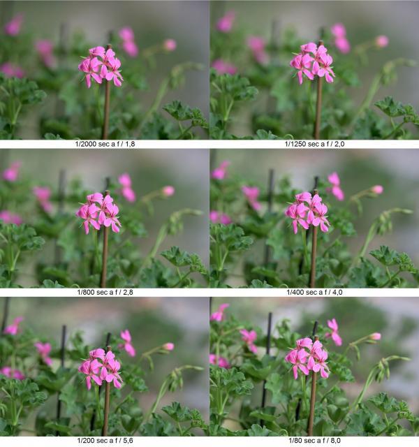 fiori2.jpg