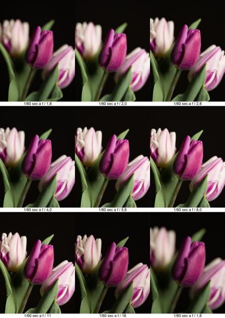 Immagine Allegata: fiori.jpg