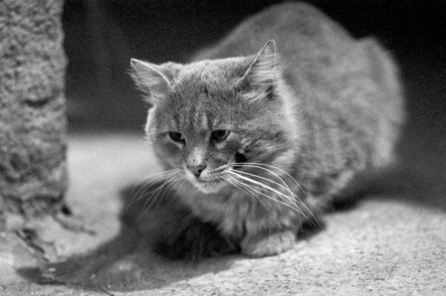 Gattino curioso (1).jpg