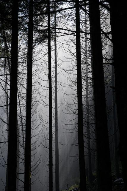 Immagine Allegata: mist.jpg