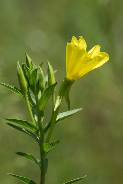 Immagine Allegata: fiore.jpg