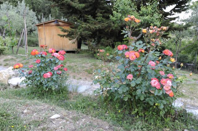 Immagine Allegata: UV1024.jpg