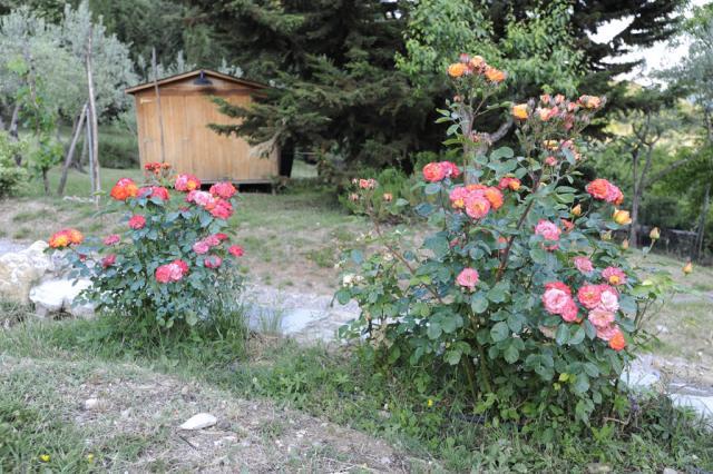 Immagine Allegata: Polar21024.jpg