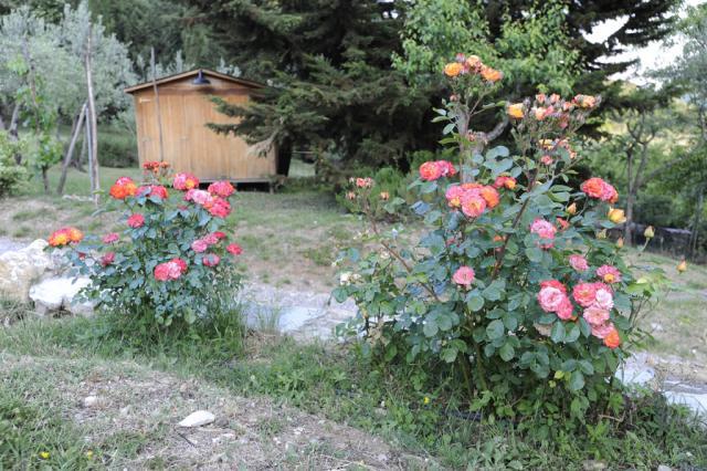 Immagine Allegata: Polar11024.jpg