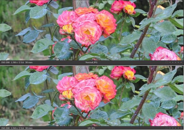 Immagine Allegata: Cropnormal+UV.jpg