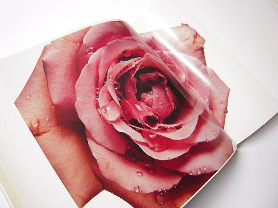 Immagine Allegata: pennflowers2.jpg