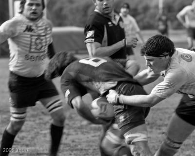Immagine Allegata: 0828r053_rugby.jpg