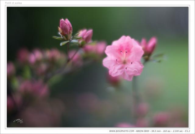 Immagine Allegata: aza58-1.2cor.jpg